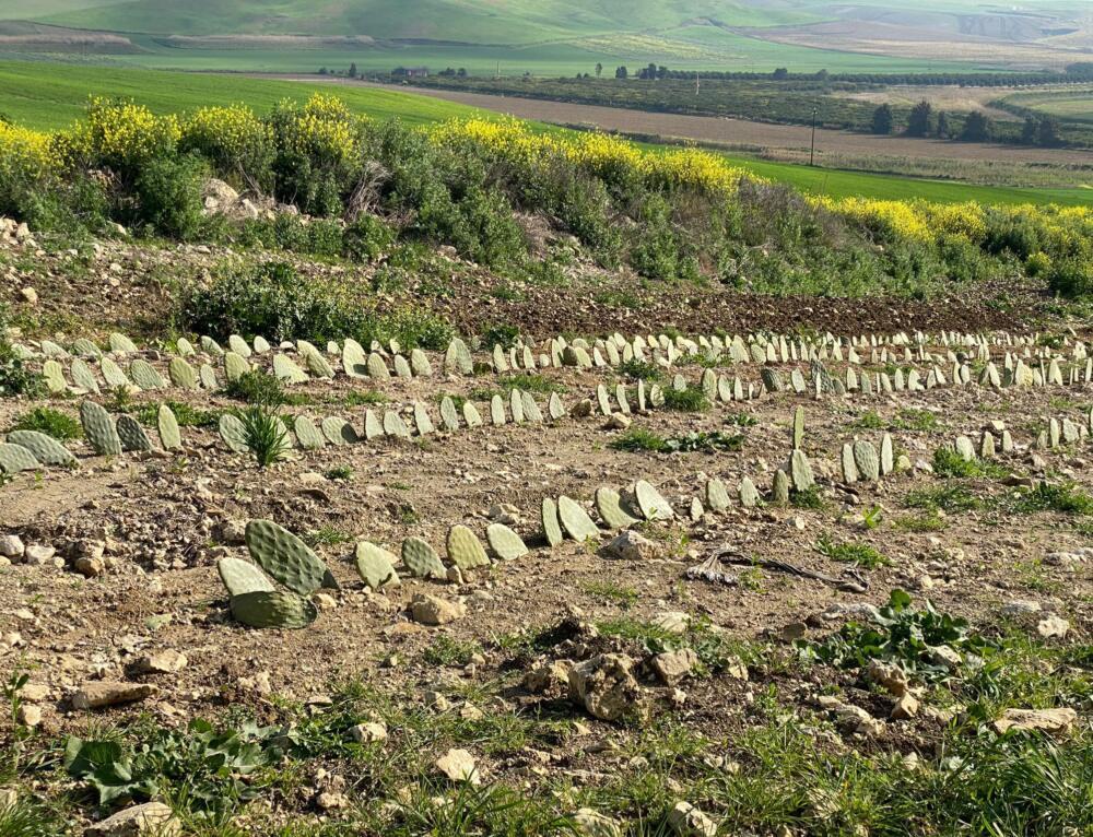 Digestato liquido, agrumi e foraggi di qualità: progetto Fertimed